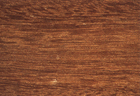 Different Types Of Wood For Furniture Making In Sri Lanka